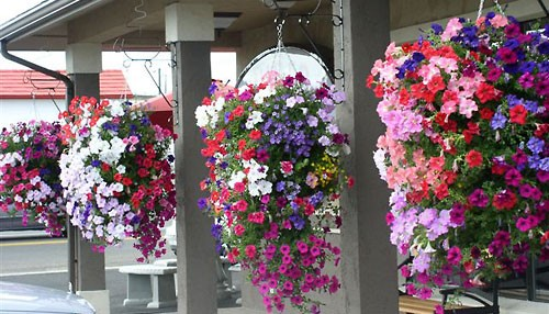 Order your hanging flower basket pagosa springs chamber order your hanging flower basket mightylinksfo