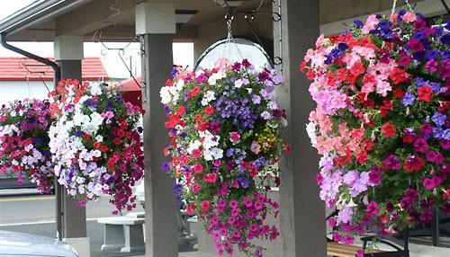 Hanging Flower Baskets Sales